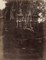 [Overgrown temple near the Hoysalesvara Temple, Halebid.]